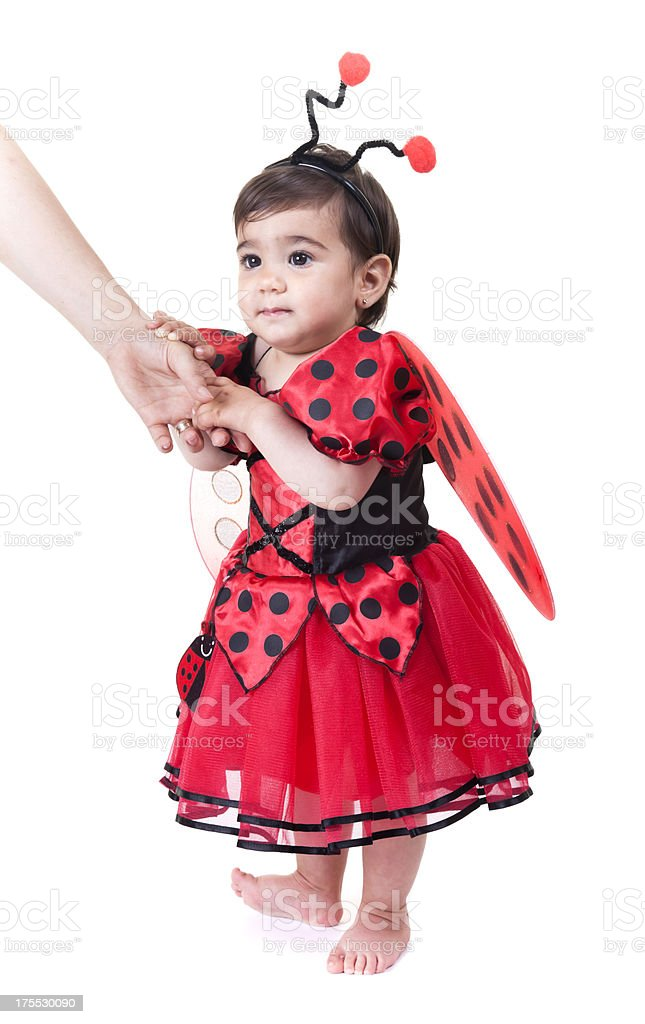 little baby ladybug taking the first steps stock photo