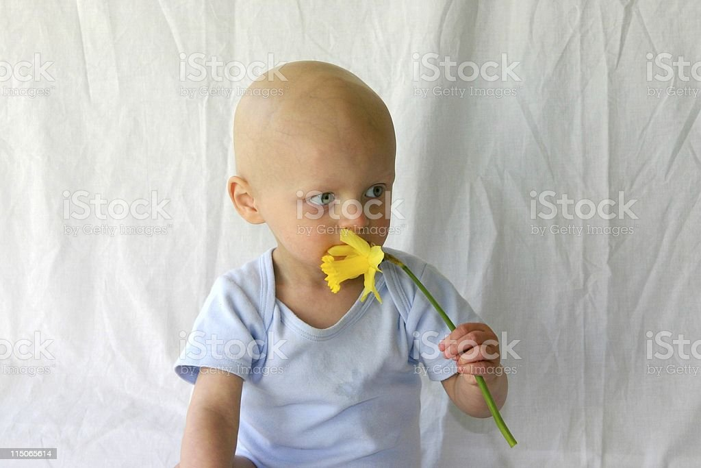 A little baby with cancer holding a daffodil royalty-free stock photo