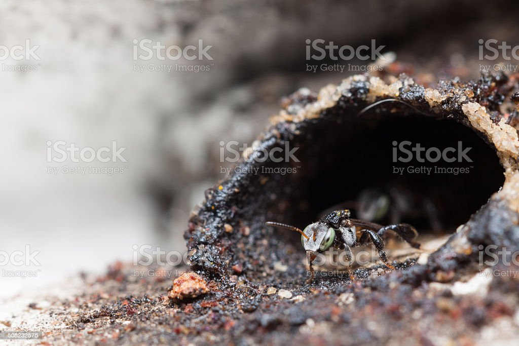 Little bee ready to out of home stock photo