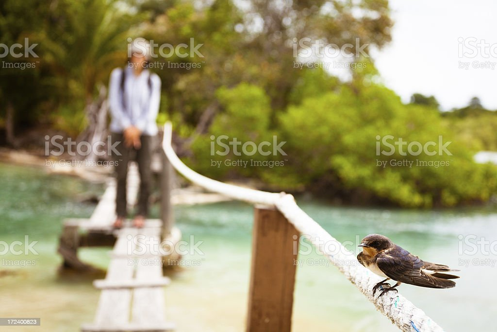 Little Bird and Explorer in the Jungle royalty-free stock photo