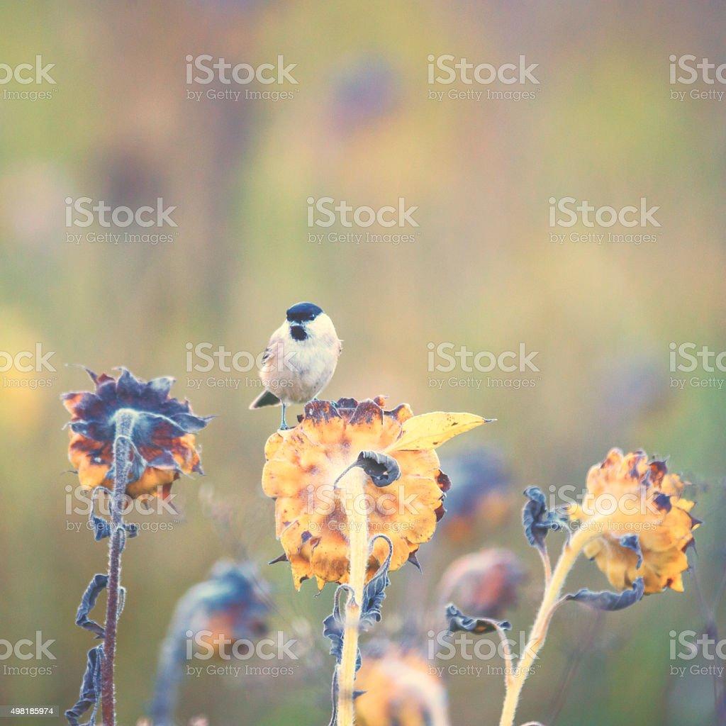 Little bird gets sunflower seeds stock photo