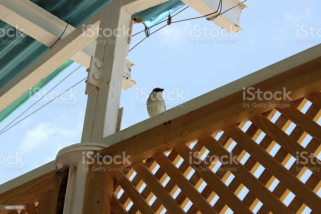 Little Bird in Djibouti royalty-free stock photo