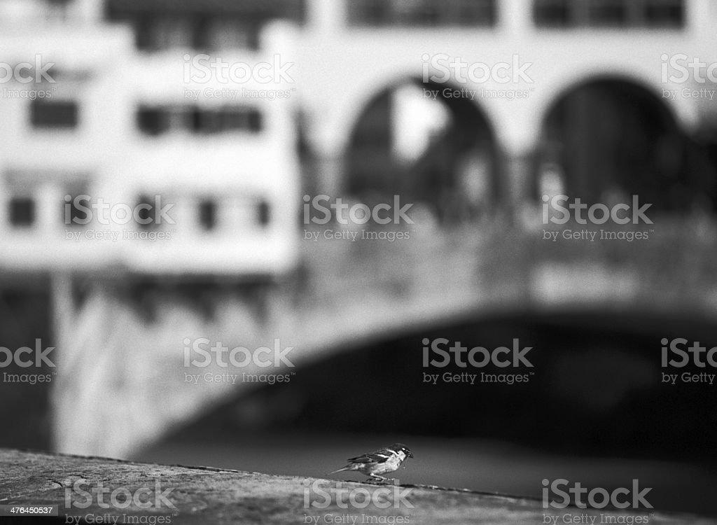 Little bird in Florence stock photo