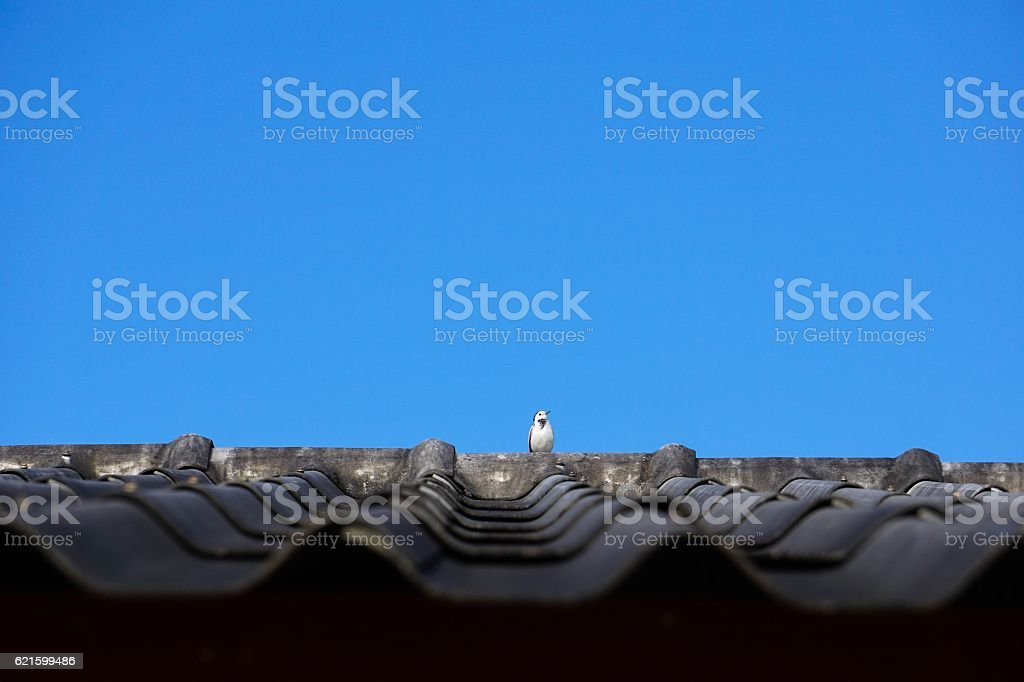 Little bird on the roof royalty-free stock photo