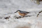 Little bird on the snow