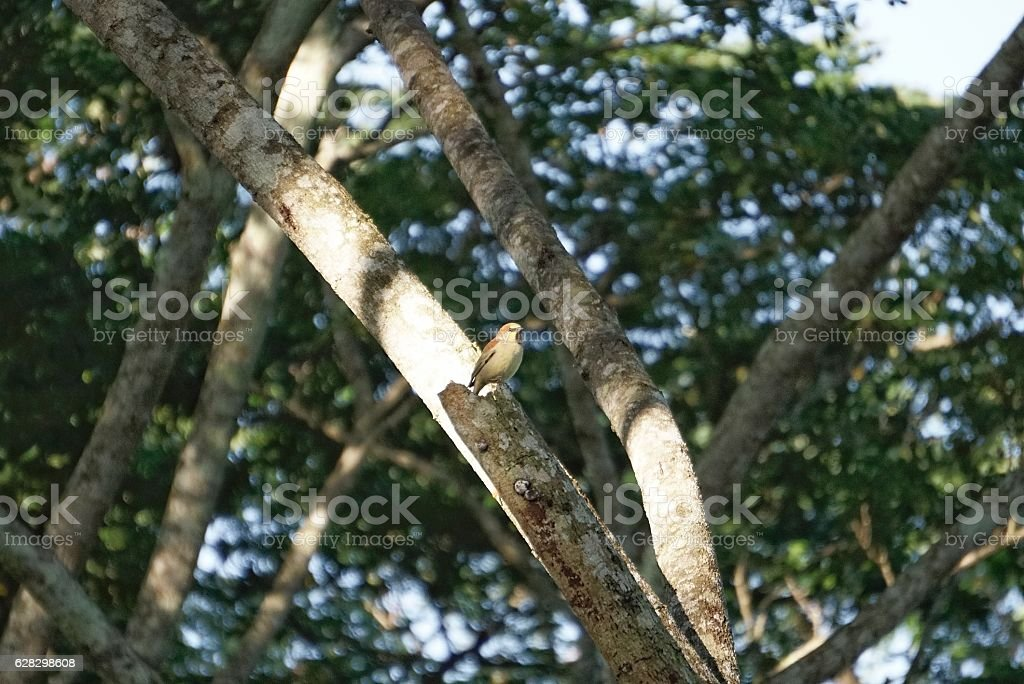 Little bird on the tree royalty-free stock photo
