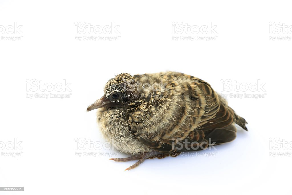 Little bird on white background royalty-free stock photo