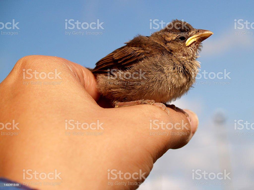 little bird royalty-free stock photo
