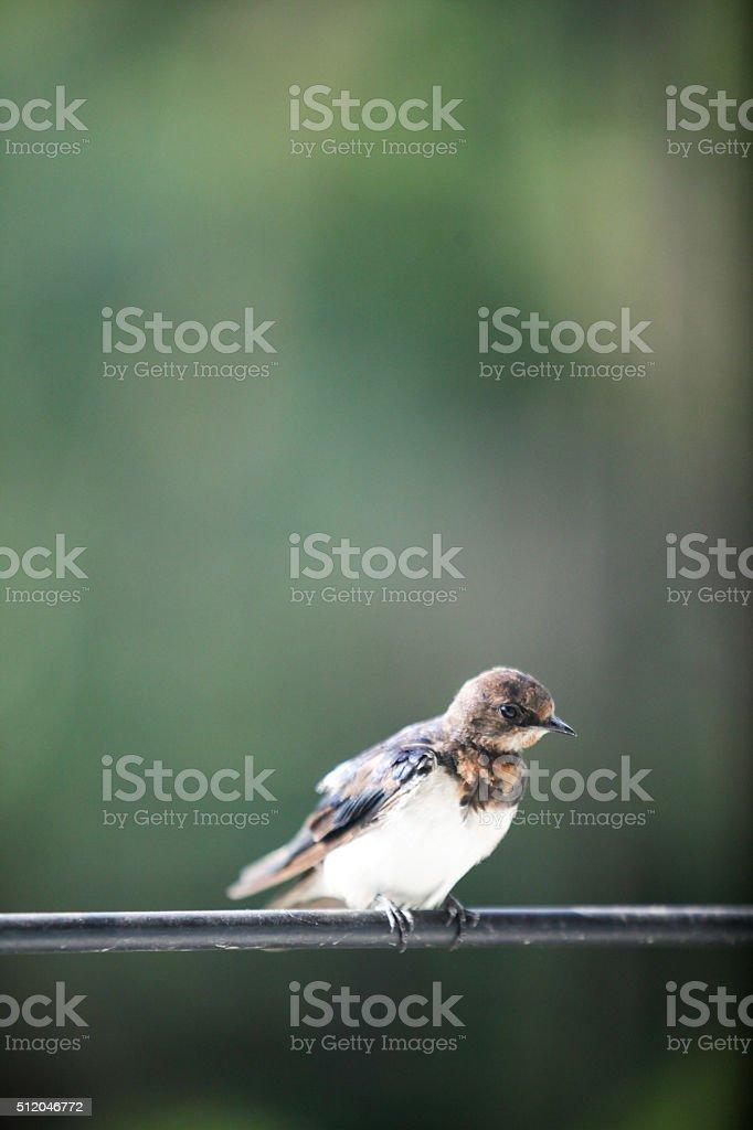 Little bird stock photo