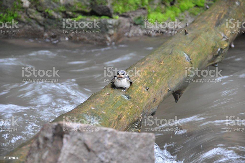 Poco pájaro tendido sobre un registro foto de stock libre de derechos