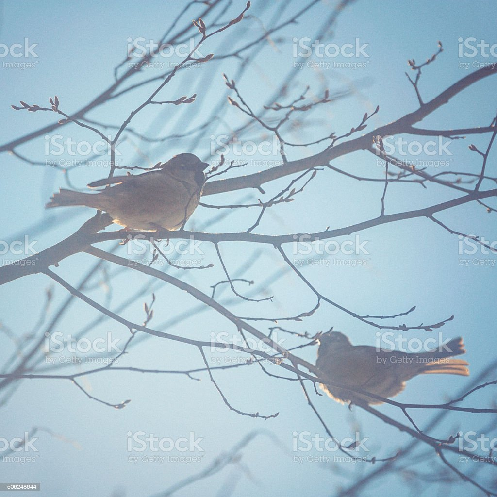 Little bird sitting on a tree in winter stock photo