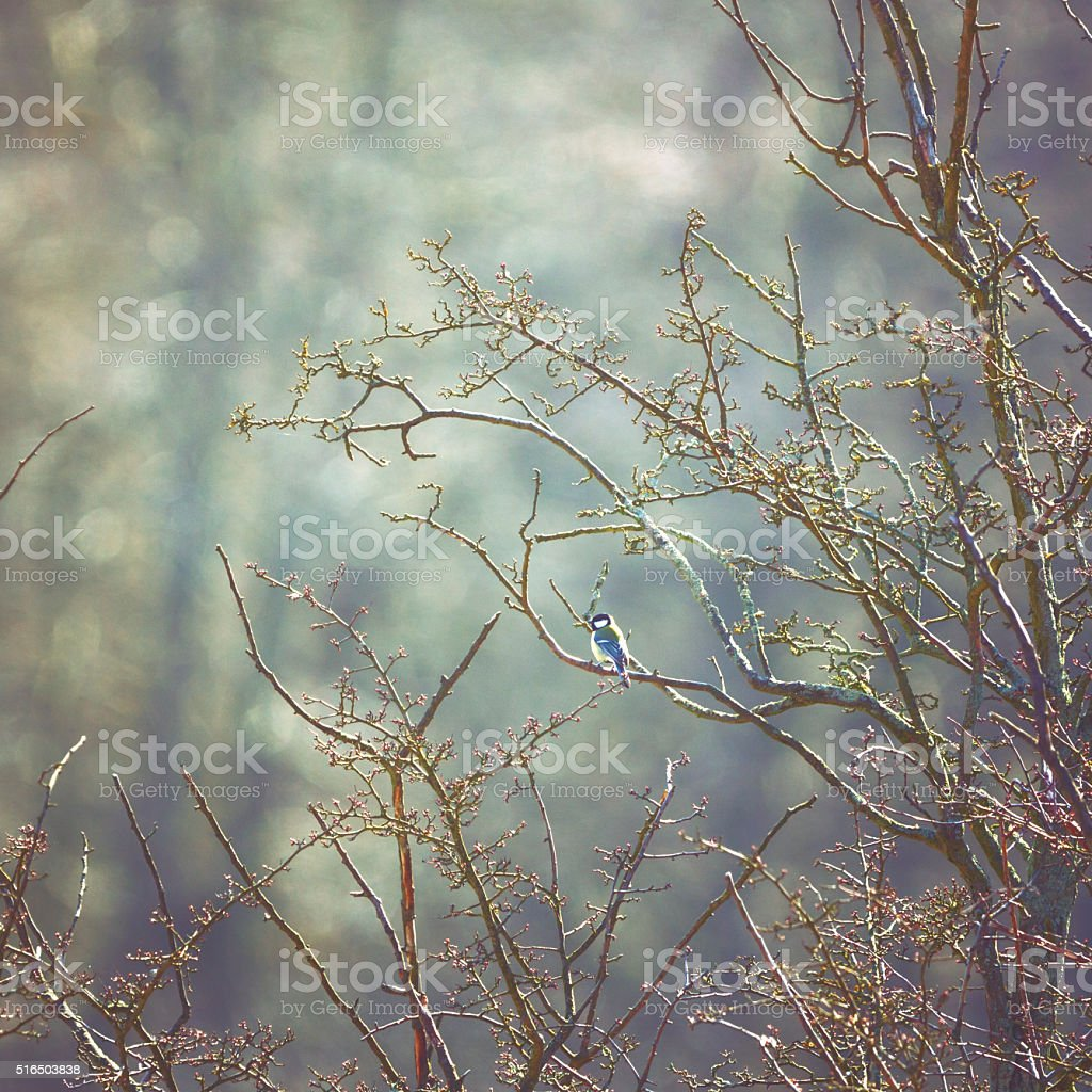 Little bird sitting on a tree in winter stock photo