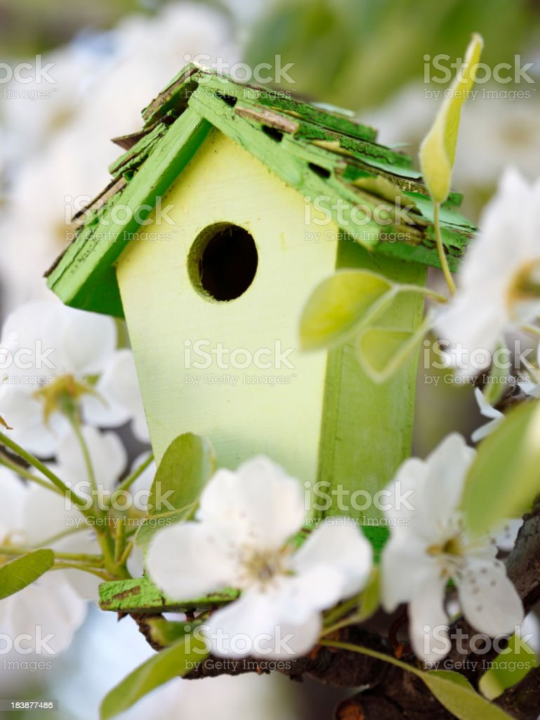 Little Birdhouse in Spring stock photo