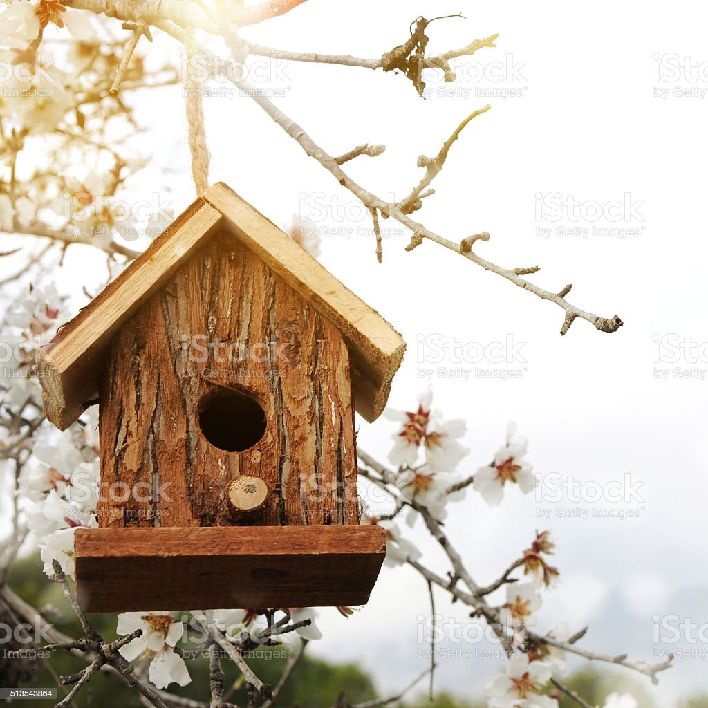 Little Birdhouse in Spring with blossom almond flower stock photo