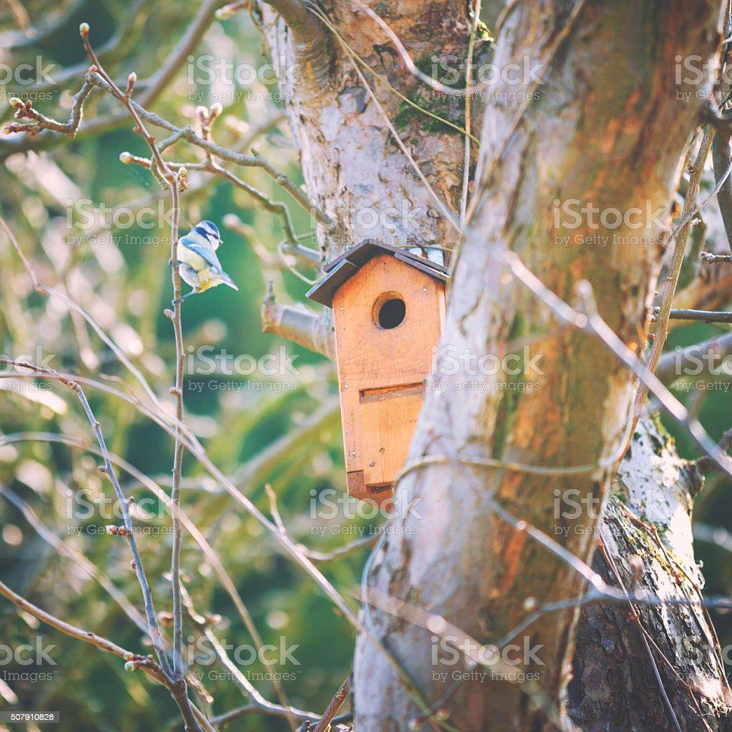 Little birds at the bird house stock photo