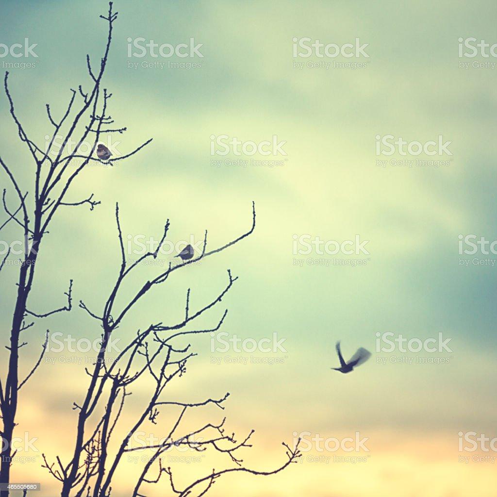 Little birds sitting ona tree in winter stock photo