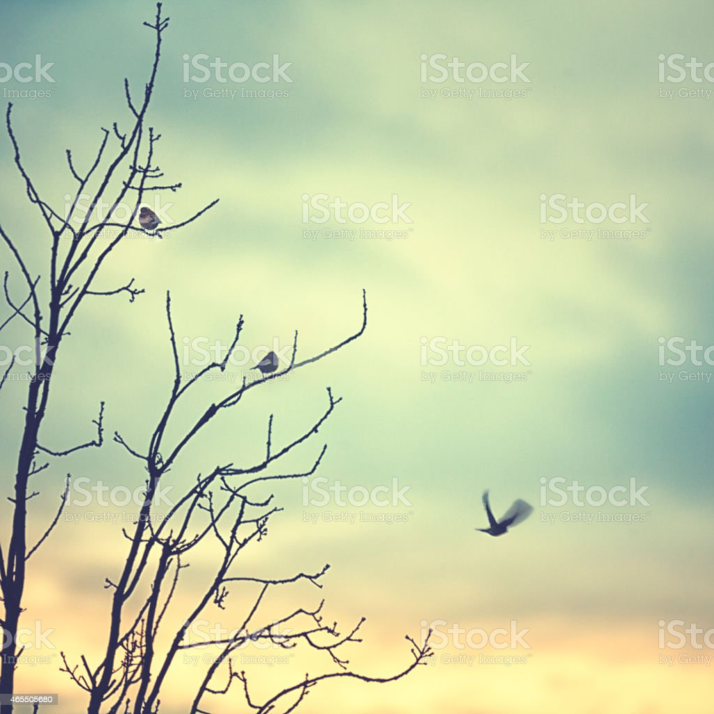 Little birds sitting ona tree in winter stock photo
