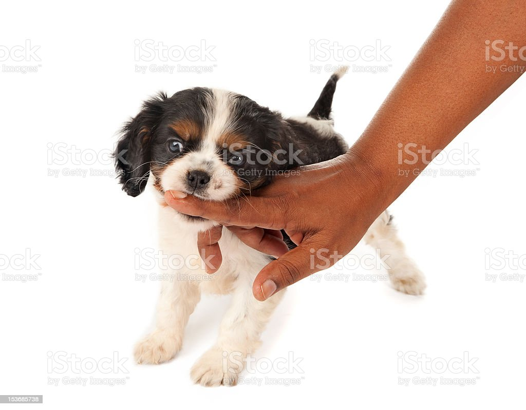 Little biter royalty-free stock photo