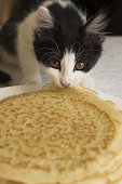 Little black and white kitten eating pancakes