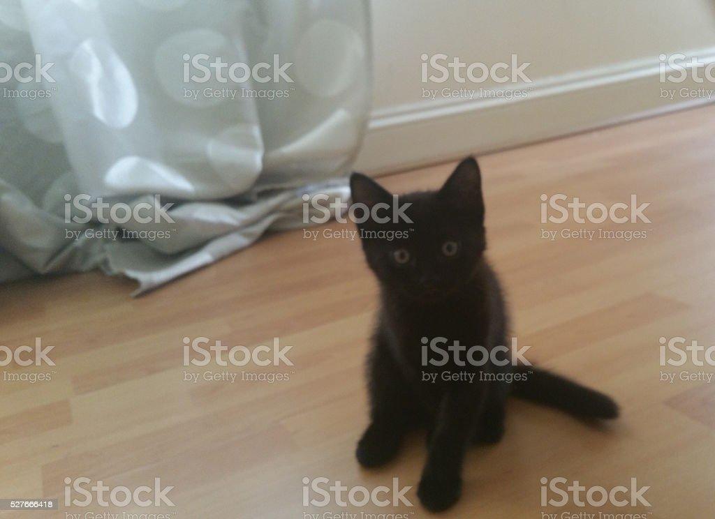 Little Black Kitten stock photo