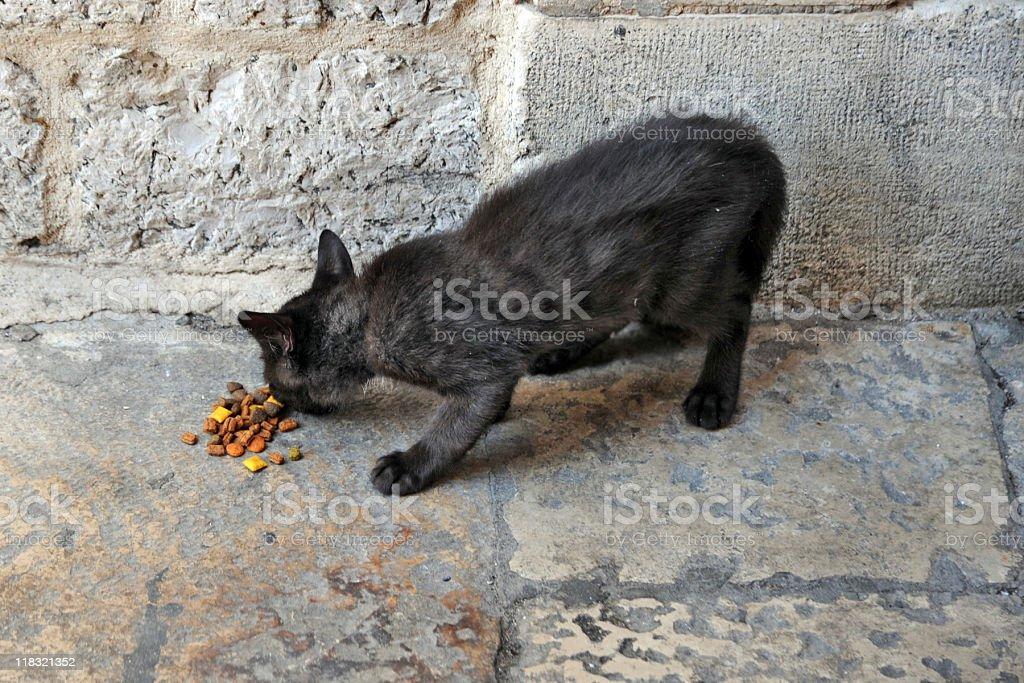 little black stray cat royalty-free stock photo