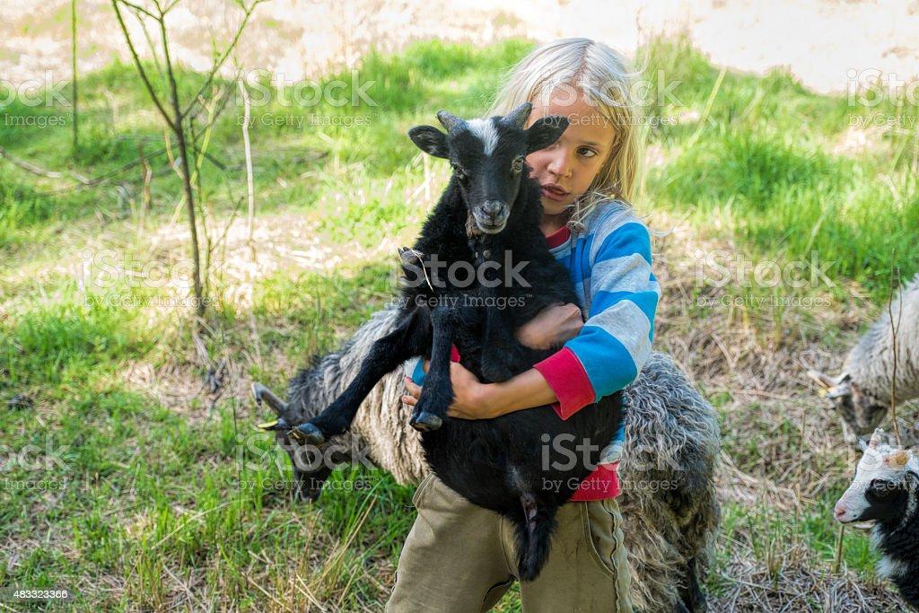 Little blond boy carrying black lamb. stock photo