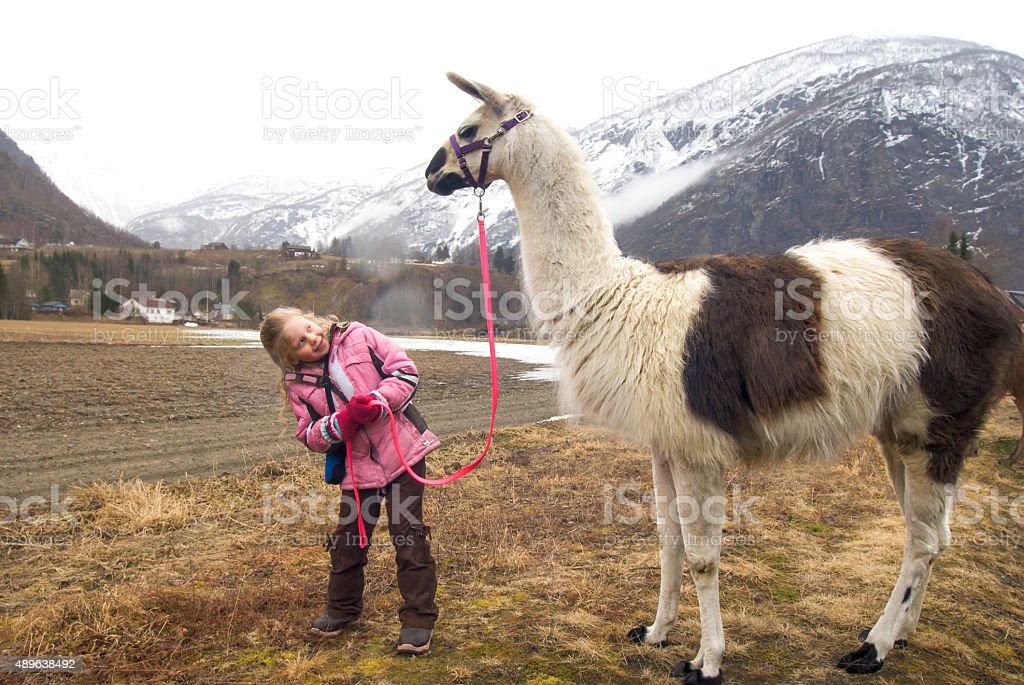 Little blond girl leads a llama on a trek stock photo