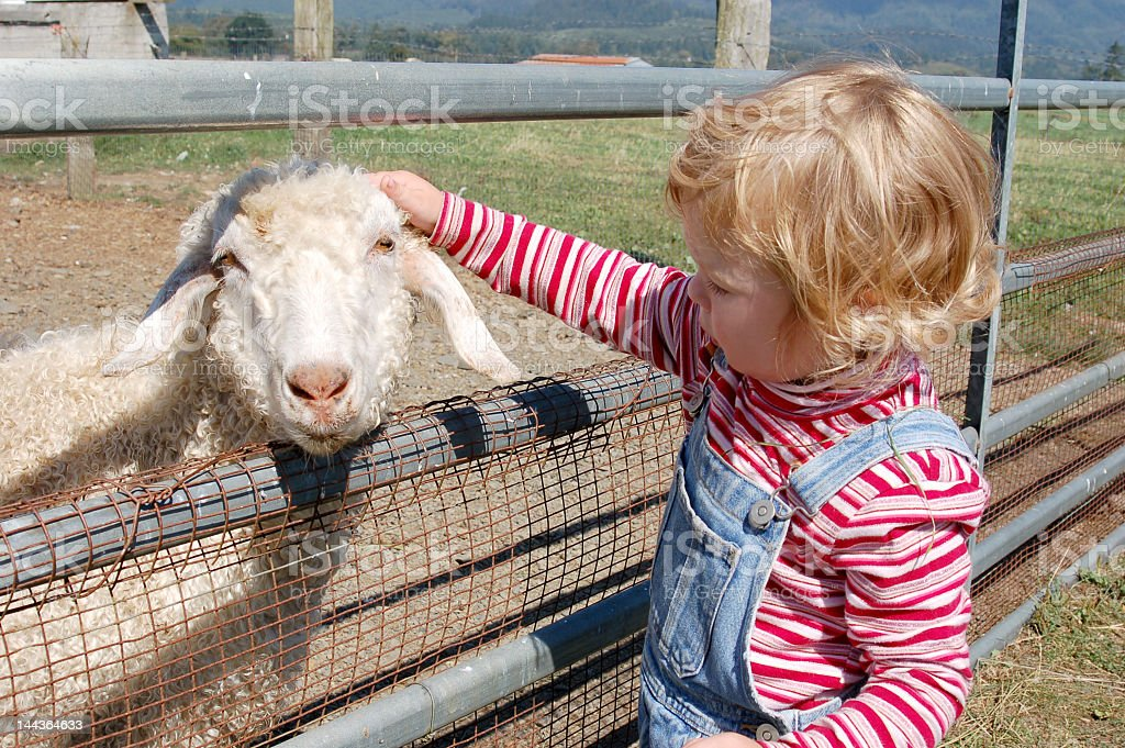 A little blonde girl petting a goat's head  stock photo