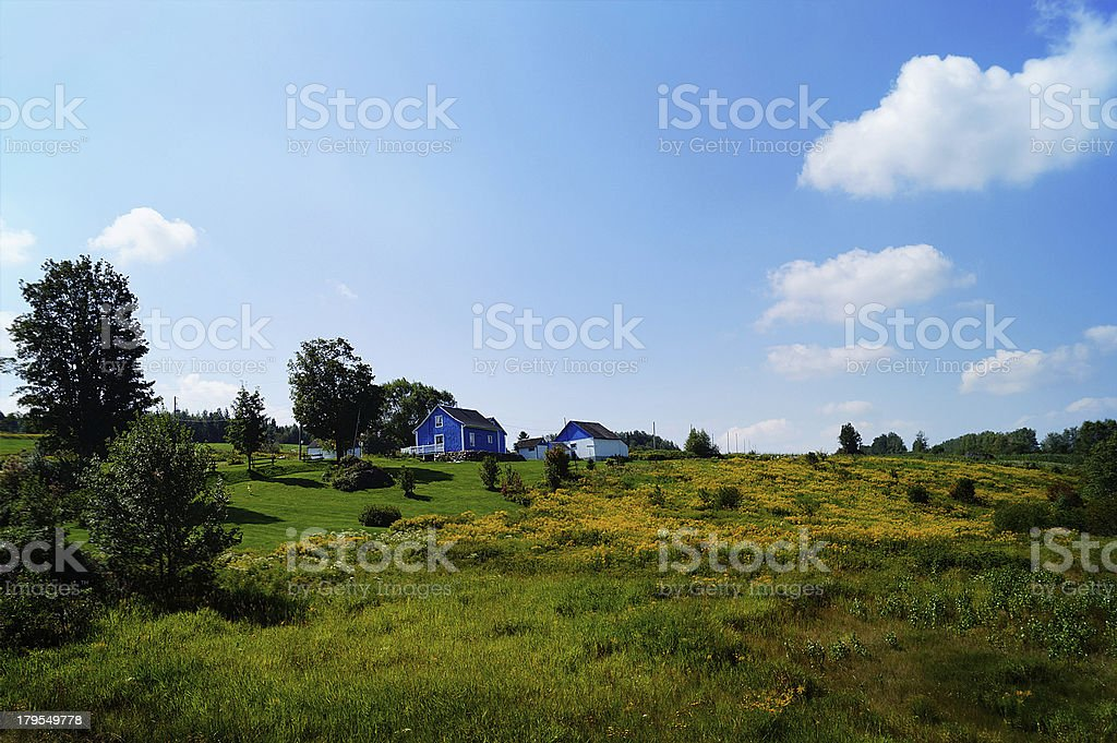 Little Blue house - yellow flowers field royalty-free stock photo
