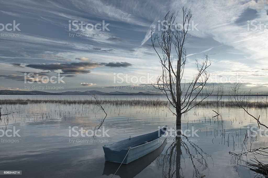 Little boat and tree stock photo