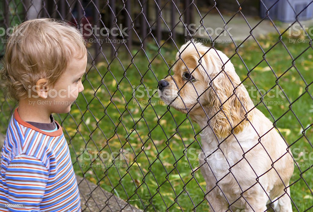 Little boy and dog behind fence stock photo