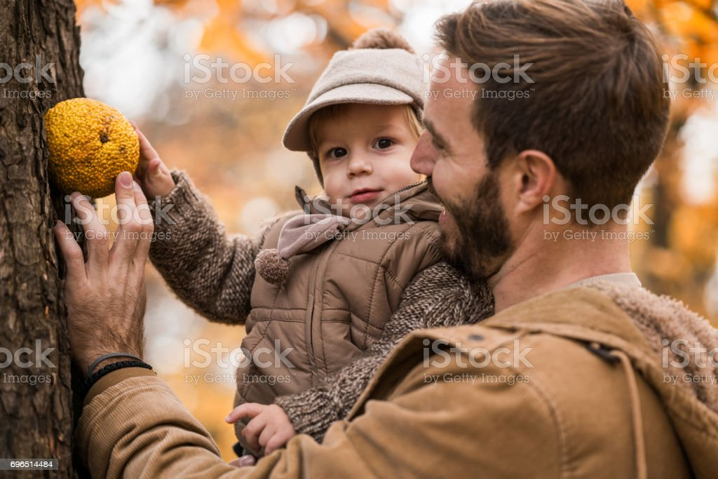 Little boy and his father playing with Osage orange outdoors. stock photo