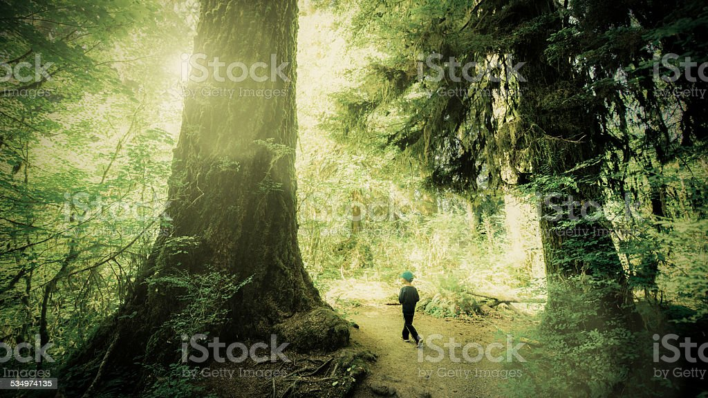 Little Boy at Olympic National Park stock photo