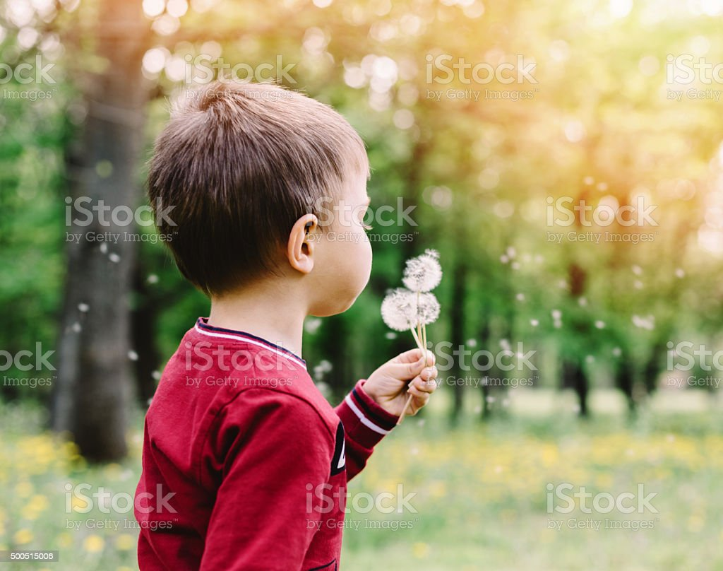 Little boy blowing dandelions stock photo