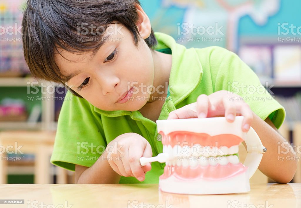 little boy brushing Fake Jaw learn how to brush teeth stock photo
