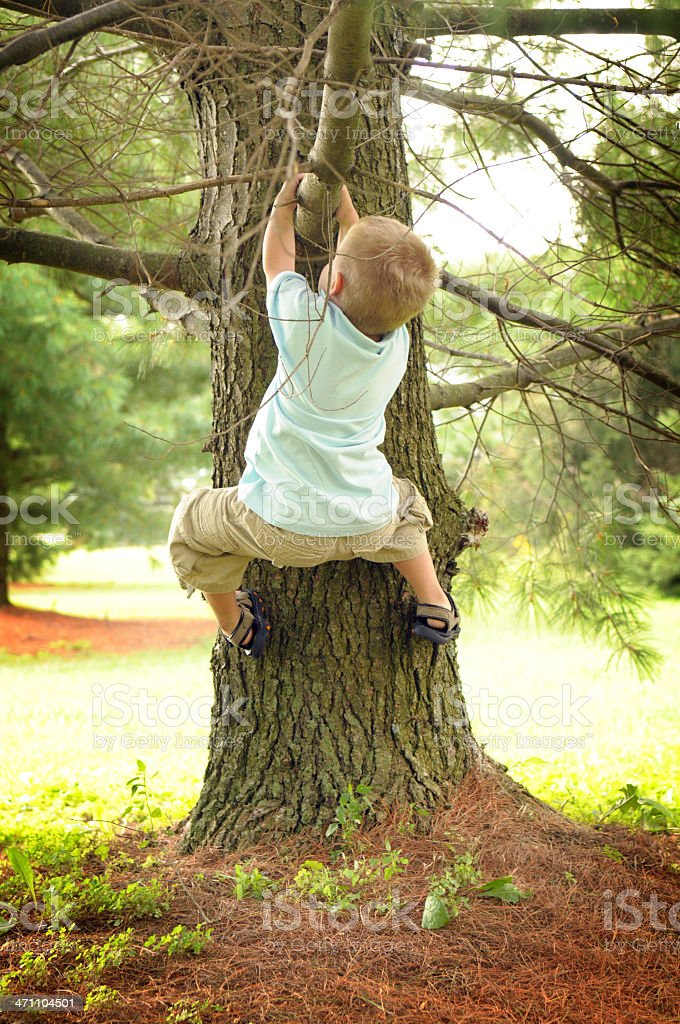 Little Boy Climbing a Tree stock photo