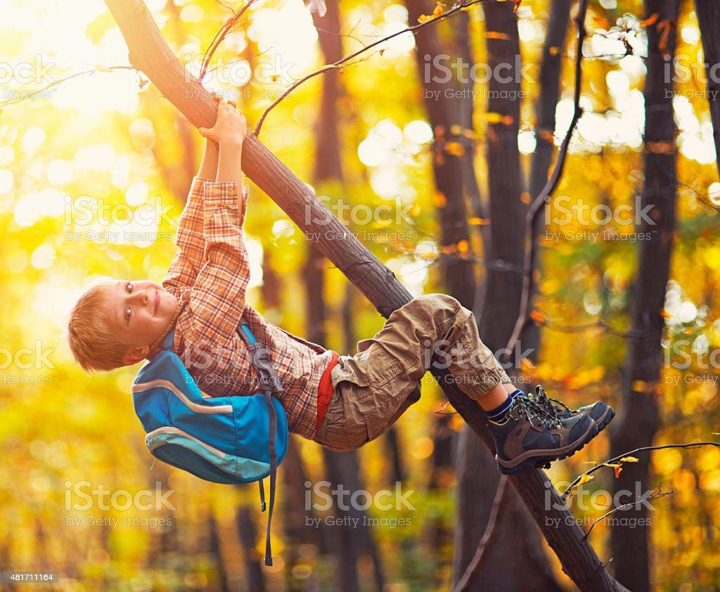 Little boy climbing the autumn tree stock photo