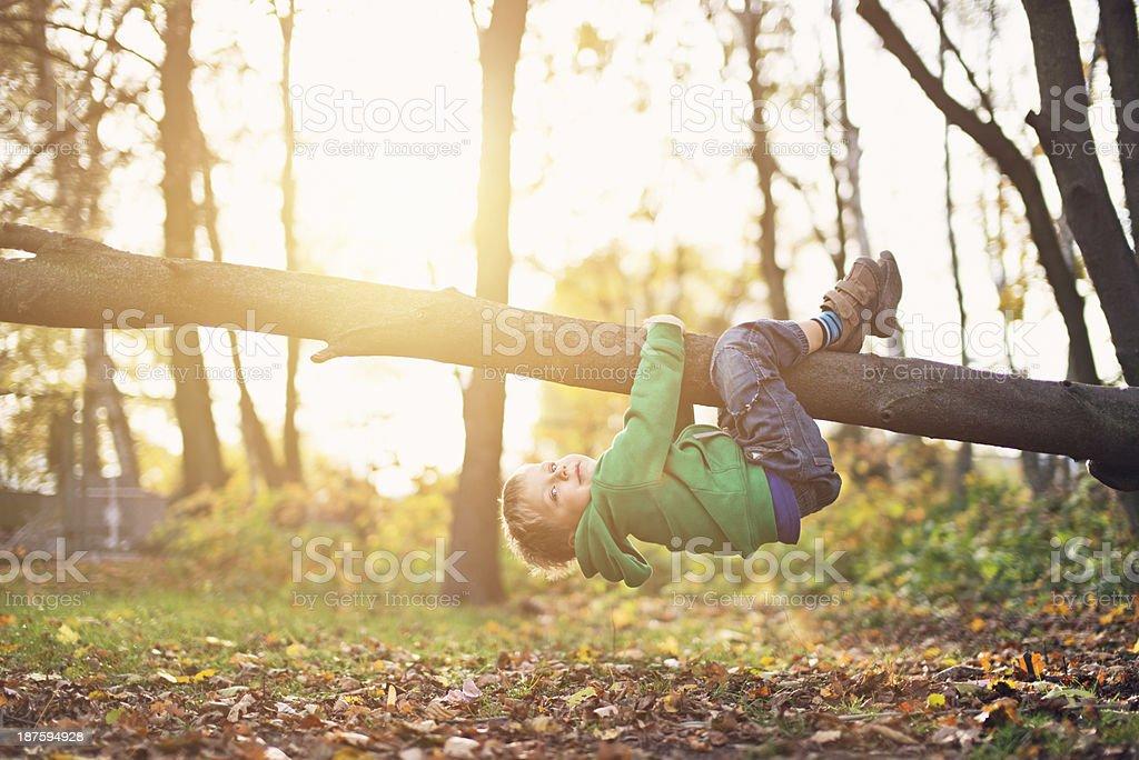 Little boy climbing the tree stock photo