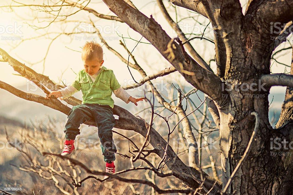 Little boy climbing tree stock photo