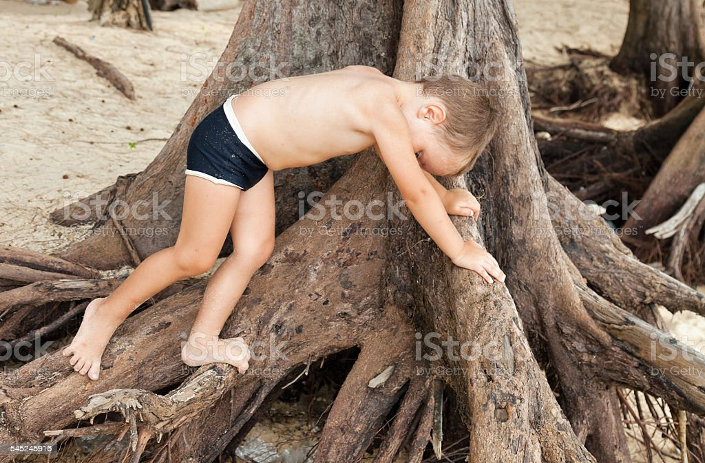 little boy climbs a tree stock photo