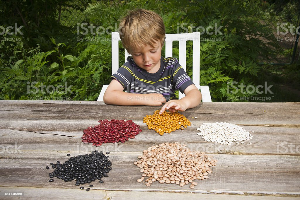 Little boy counting beans stock photo
