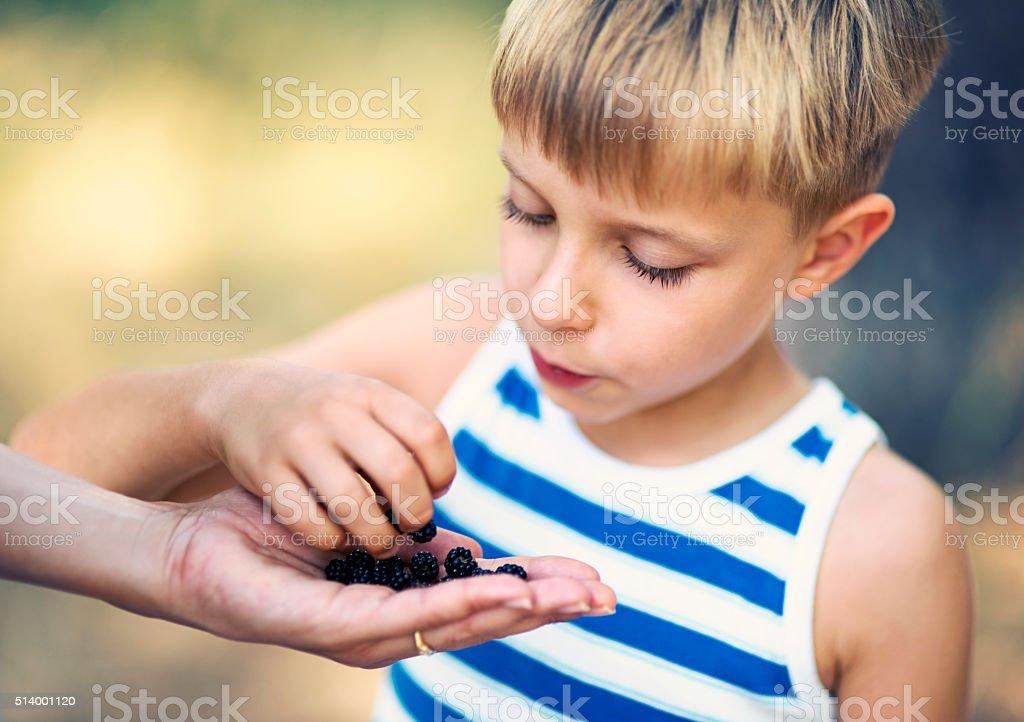 Little boy eating blackberries from mother's hand stock photo