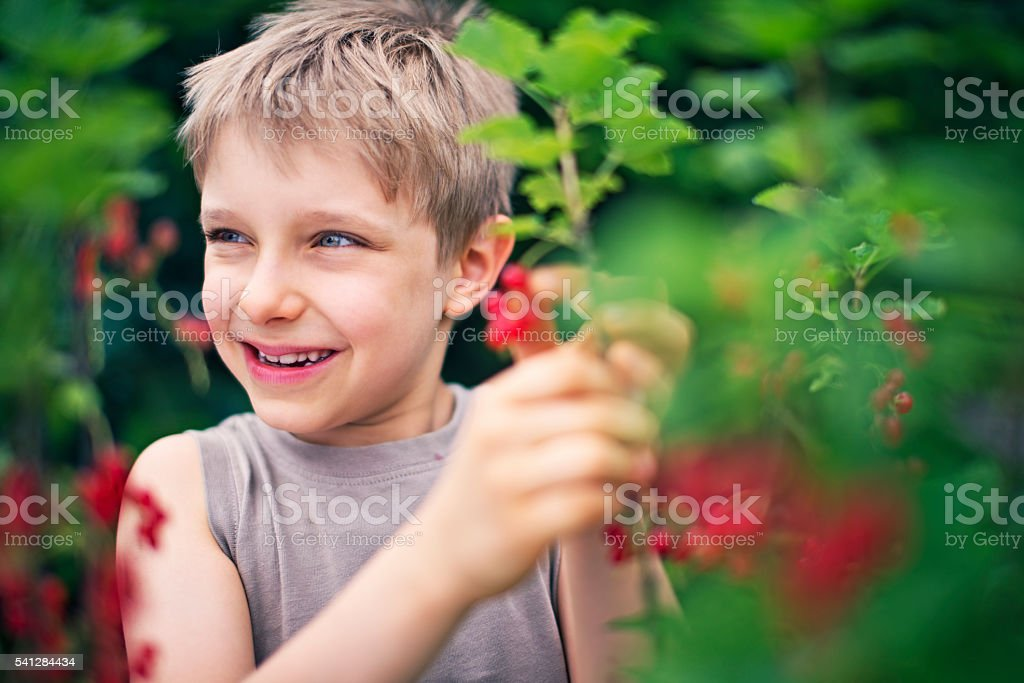 Little boy eating fresh redcurrant fruits stock photo
