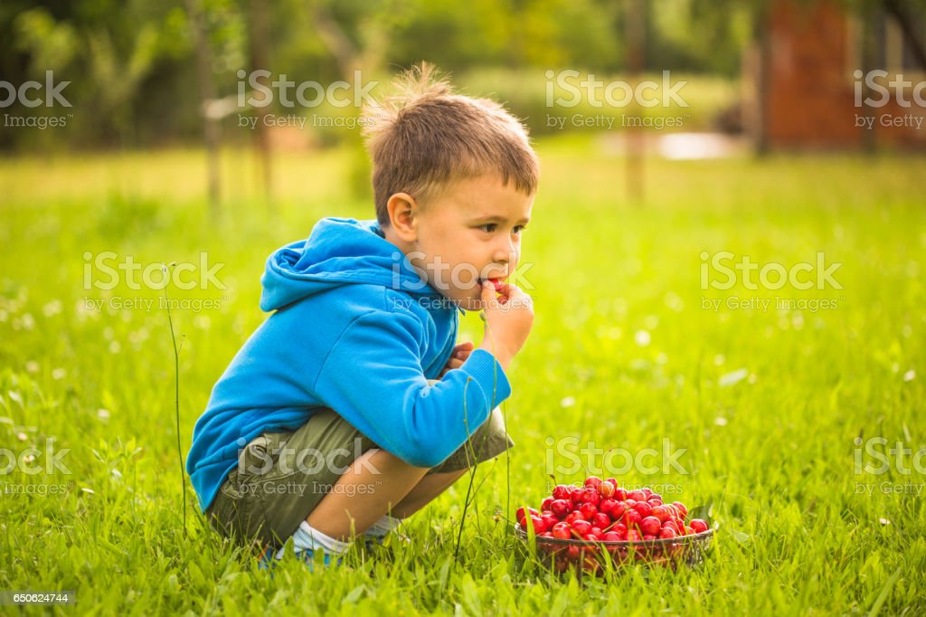 Little boy eating herries in orchard stock photo