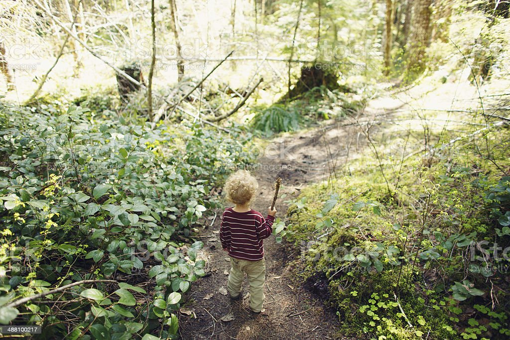 Little Boy Exploring in the Woods stock photo