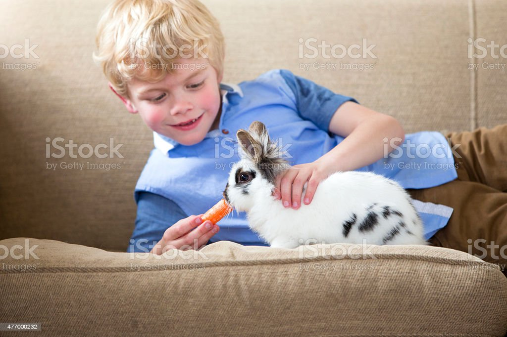 A cute little boy sits at home on the sofa with his pet rabbit,...