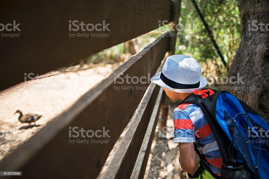 Little boy hiker observing a duck stock photo