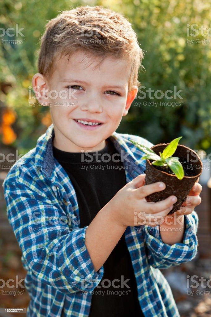 Little boy holding seedling in garden royalty-free stock photo