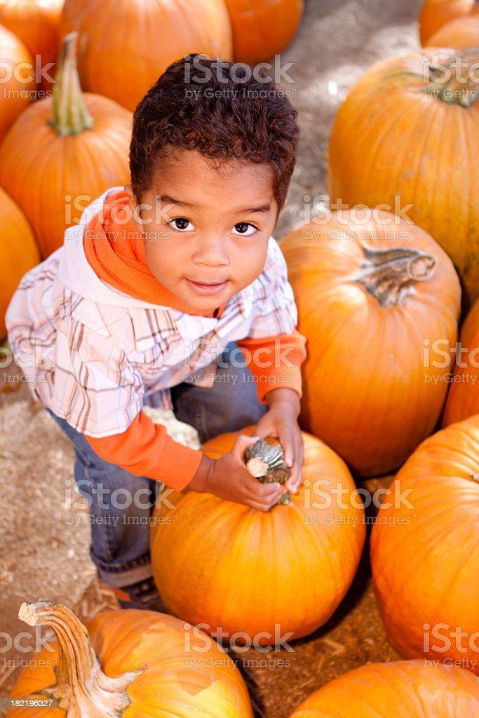 Little Boy in Pumpkin Patch stock photo