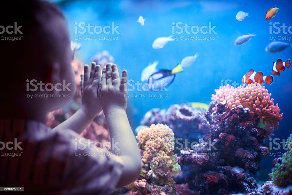 Little boy in the aquarium stock photo